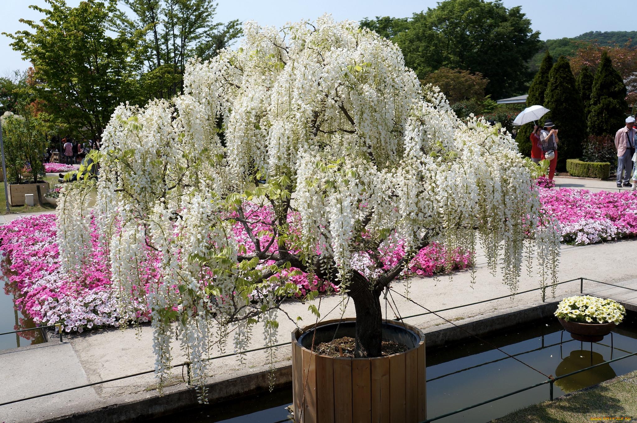 сможешь цветущие деревья для сада фото и названия совет очень